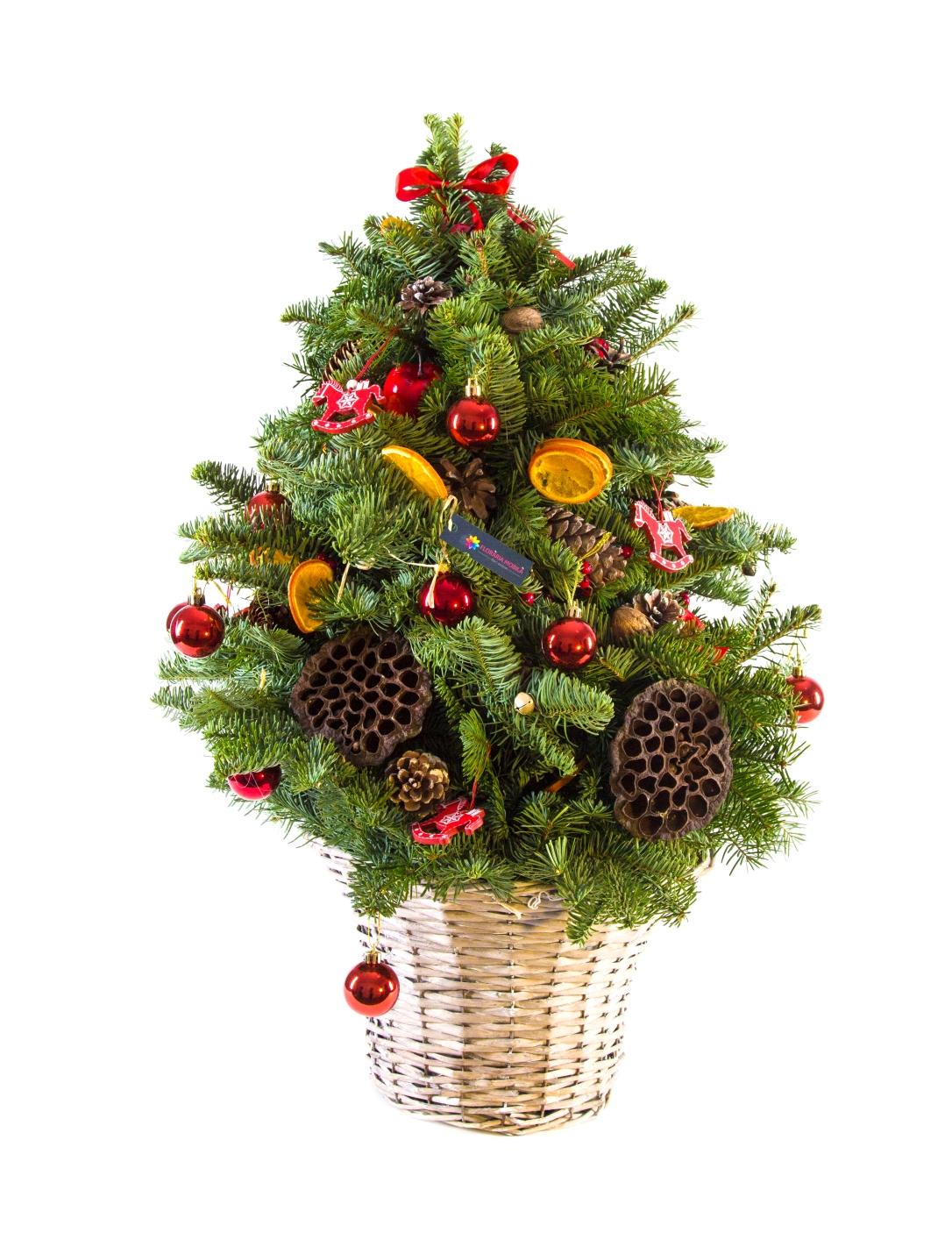 Floraria_Mobila_Flavoured_Christmas_270 lei (3)
